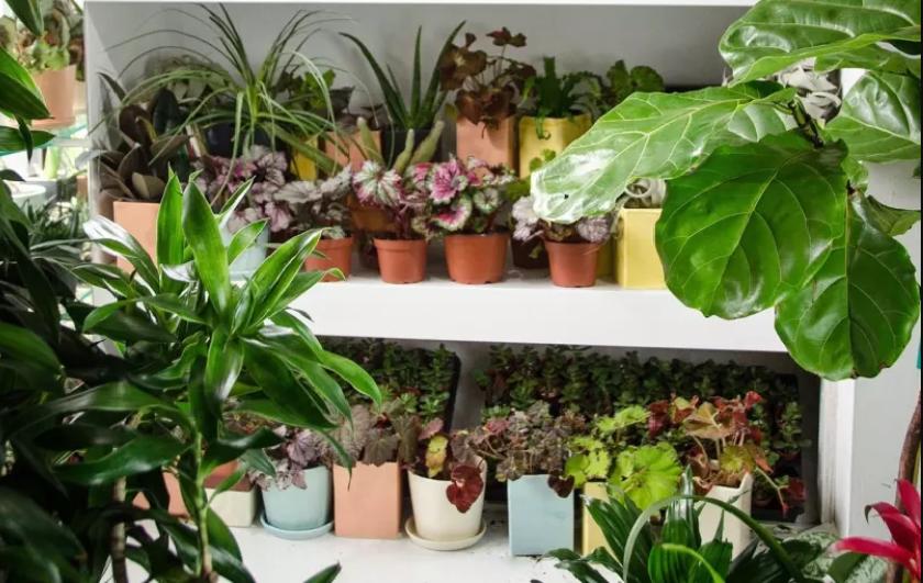 یازده بیماری و عامل خرابی گیاهان آپارتمانی+درمان